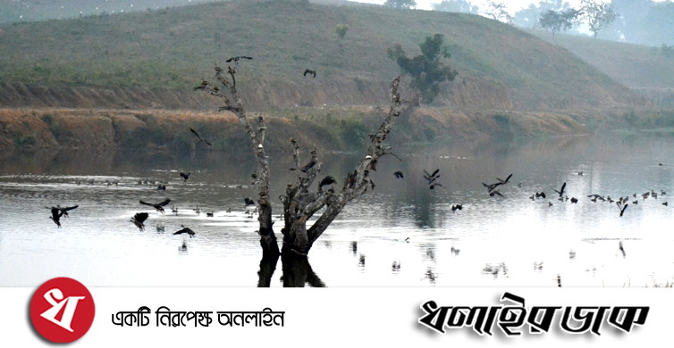 কমলগঞ্জে পাত্রখোলা লেইক পরিযায়ী পাখিদের অভয়াশ্রম