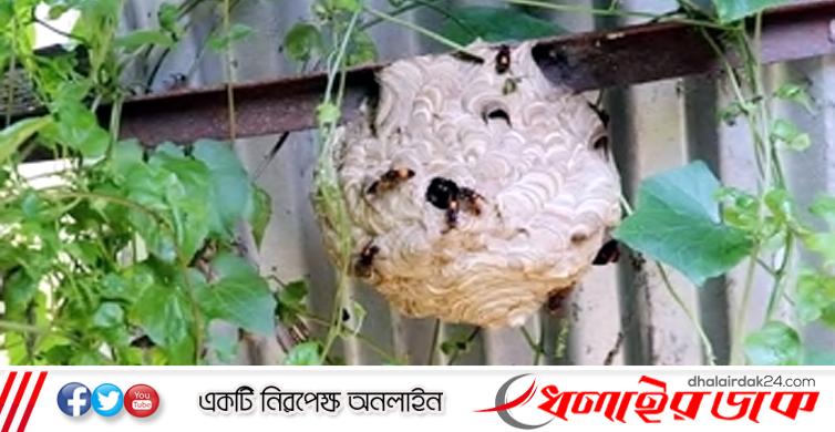 হবিগঞ্জে ভিমরুলের কামড়ে স্বামী-স্ত্রীর মৃত্যু